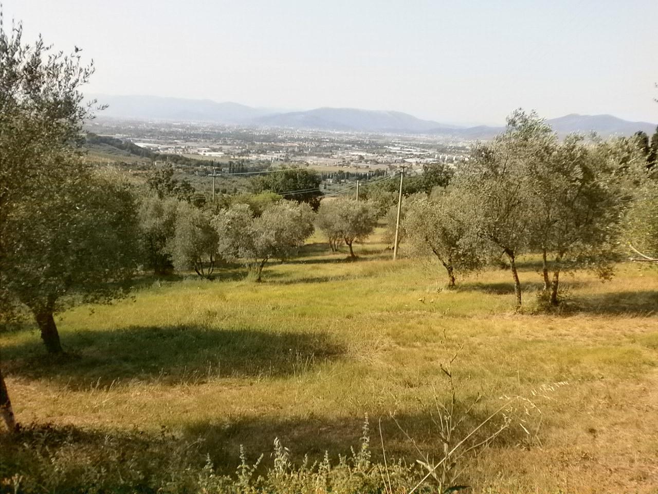 cerca Scandicci  San Martino Alla Palma TERRENO AGRICOLO VENDITA