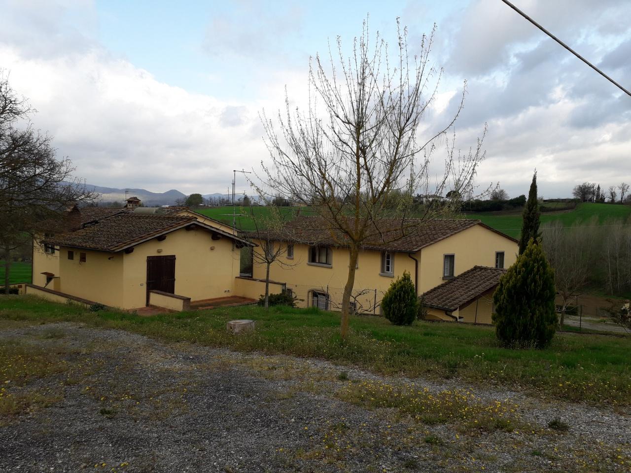 cerca Borgo San Lorenzo  AZIENDA AGRICOLA VENDITA